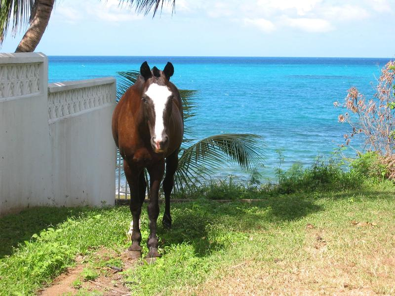 A friendly horse on the pathway to the beach near Casa Ladera