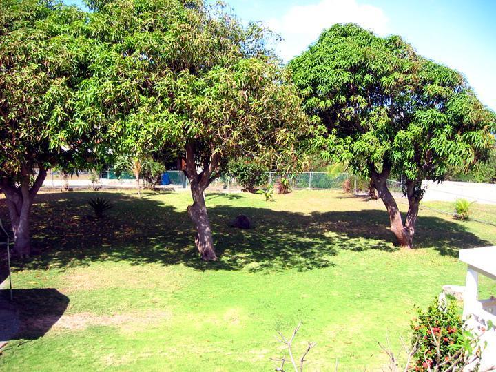 Enjoy mangoes fresh off the trees!