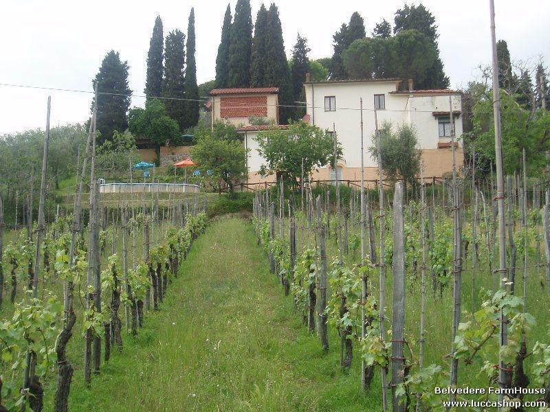 Fiordaliso House - Belvedere Farmhouse