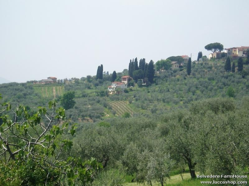 Fiordaliso House - Property surrounded by the pleacefull hills