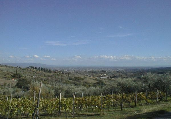 Fiordaliso House - The vineyard below the propriety