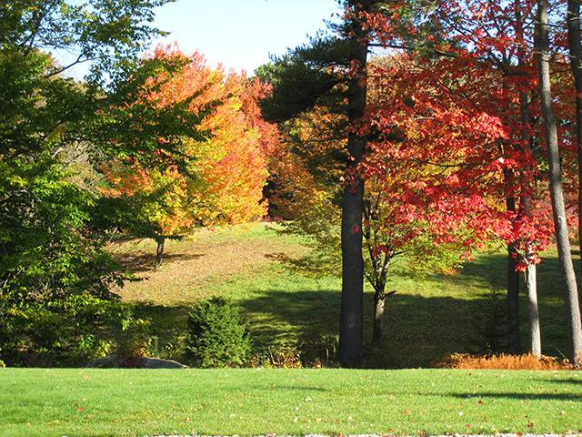 Fall Foliage the Haven Way