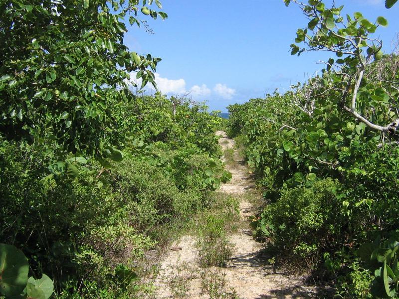 Caminho para a praia de oceano