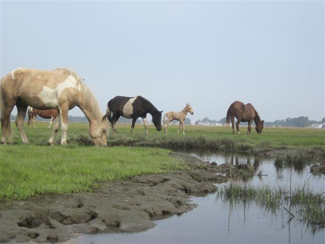 Wilde Ponys Fütterung über den Kanal