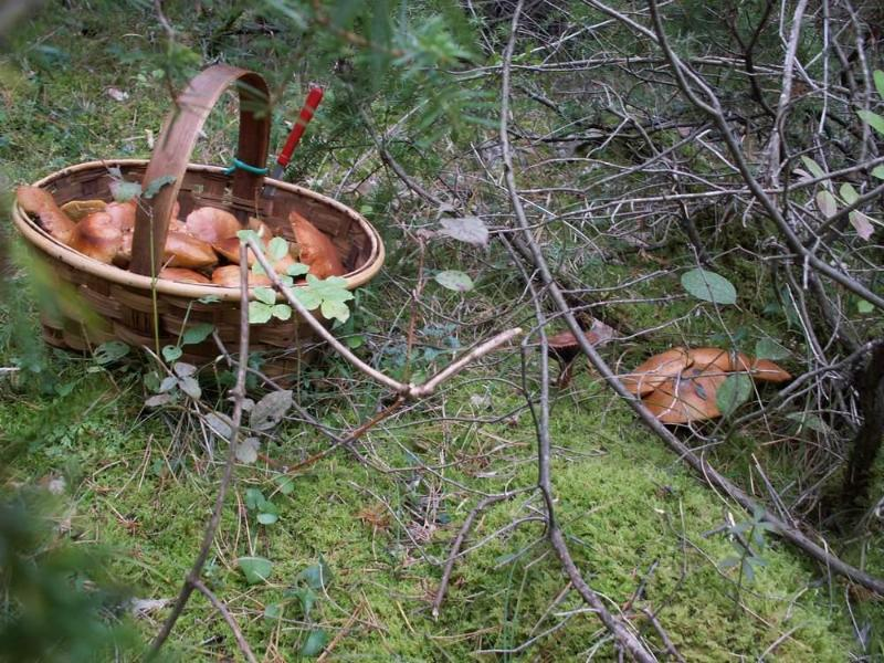 mushrooming in autumn as of mid sept. ,