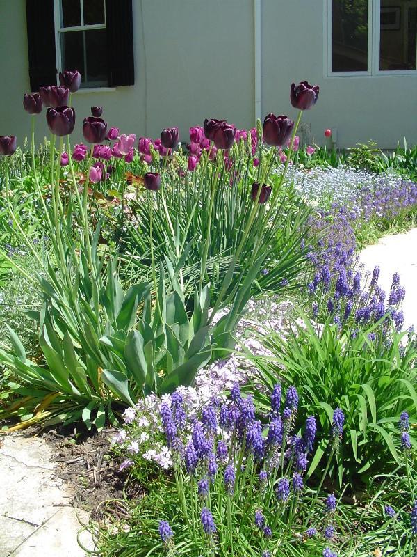 The spring garden