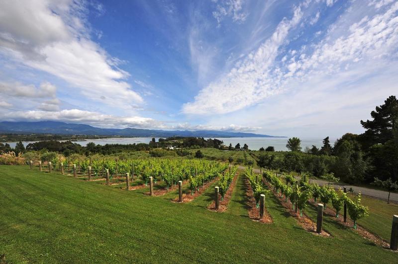 Vineyard view at Erinaceus