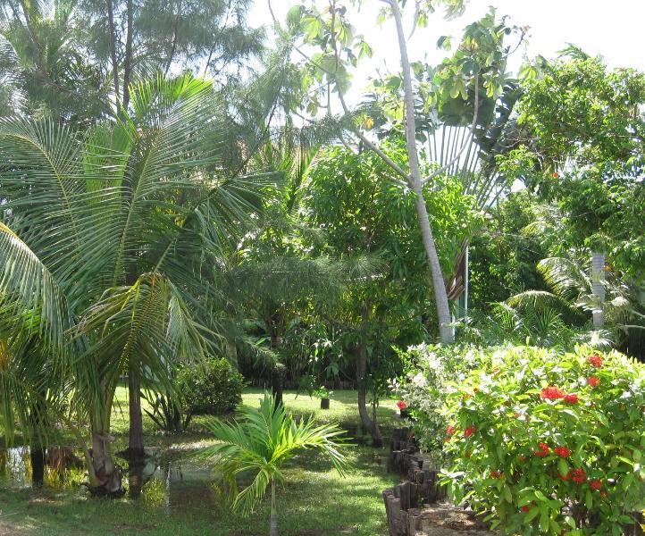 Vackra trädgårdar