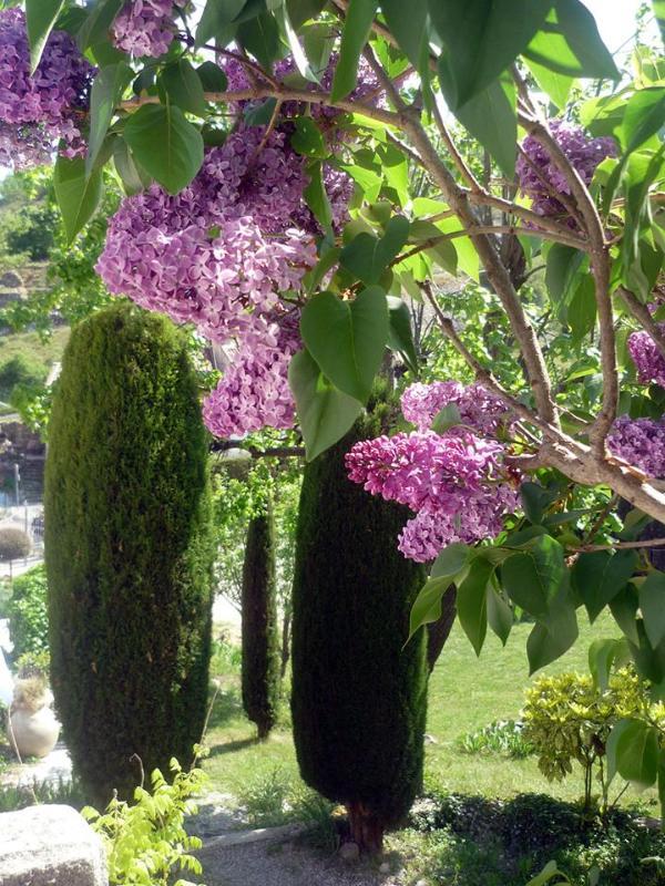Jardín y jardín