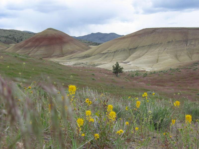 In the Painted Hills
