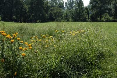 Ozarks Meadow