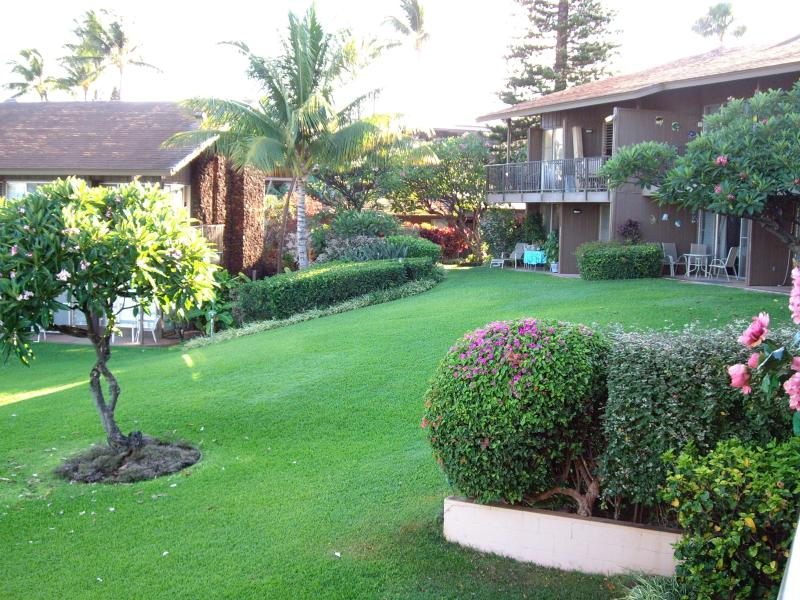 4 acres of tropical landscapint