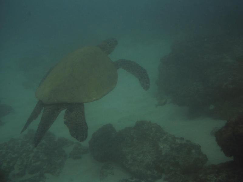 A visitor while snorkeling at condo
