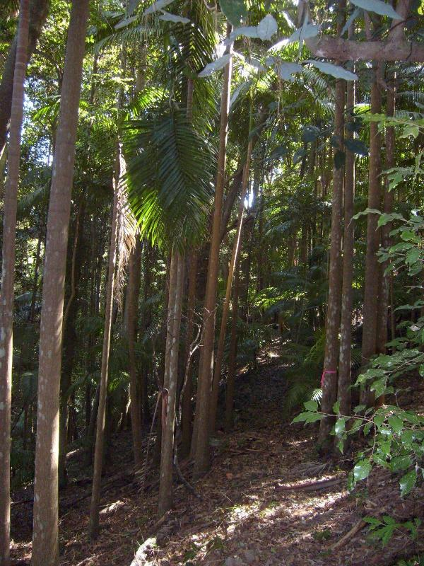 Surrounding rainforest on the property