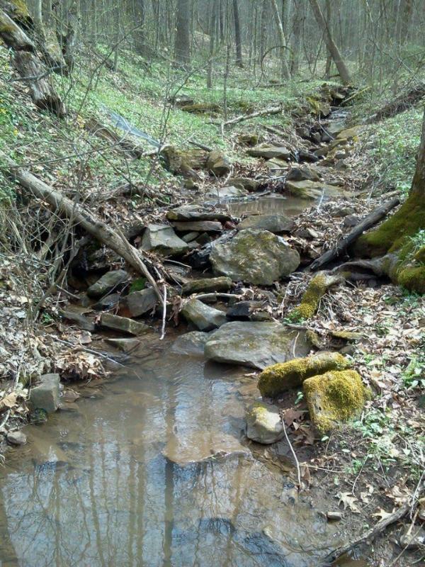 Dentre os dois riachos na propriedade.