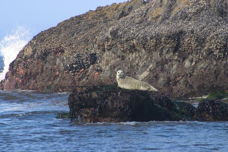 The seals of Seals Rock