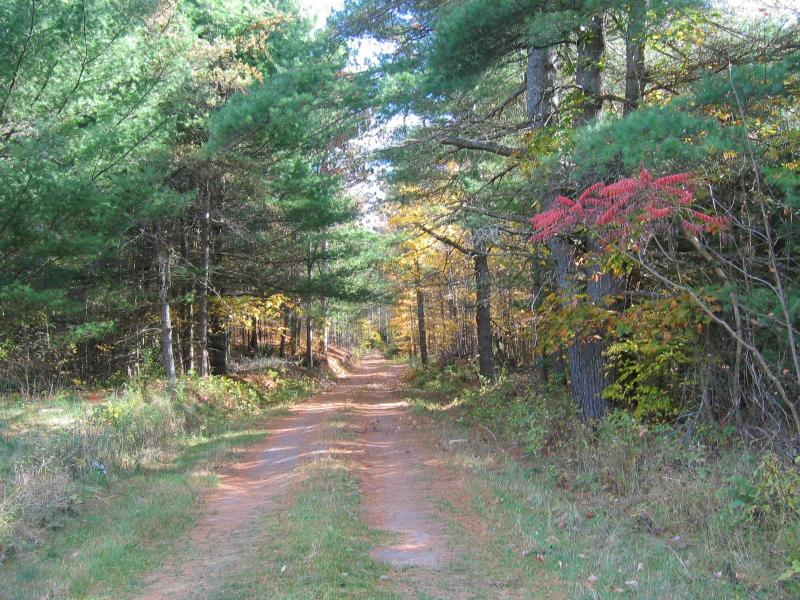 Fall colors on driveway