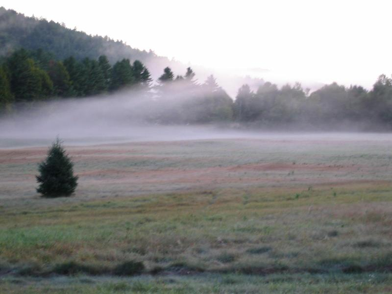 Morning fog over meadow