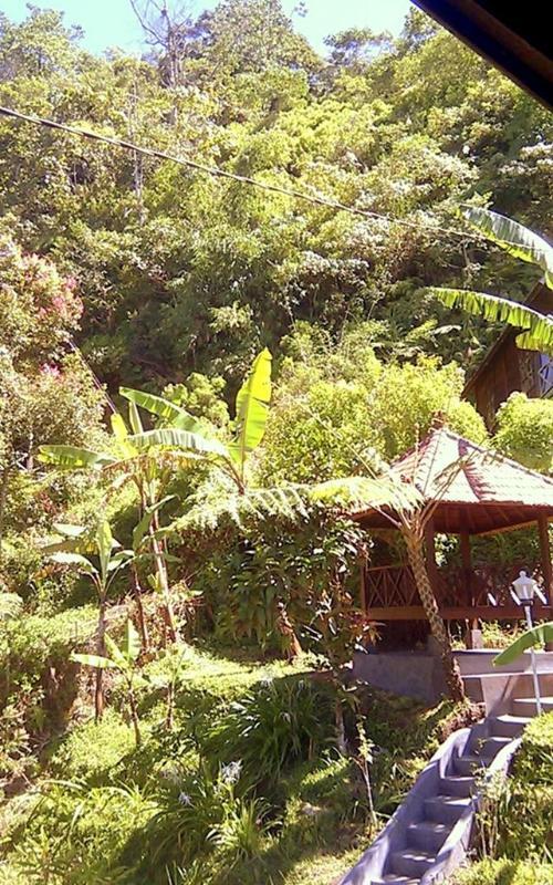 Balinese gazebo and lush jungle