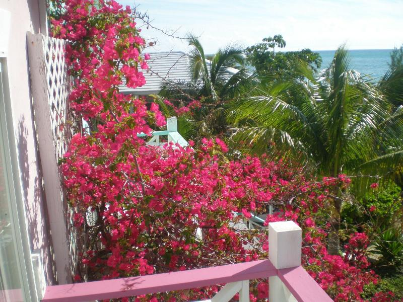 View between decks when Bougainvilleas Flowers in Bloom