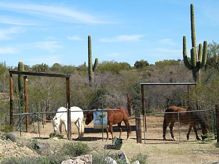 Loads of guest corral space for horsecampers