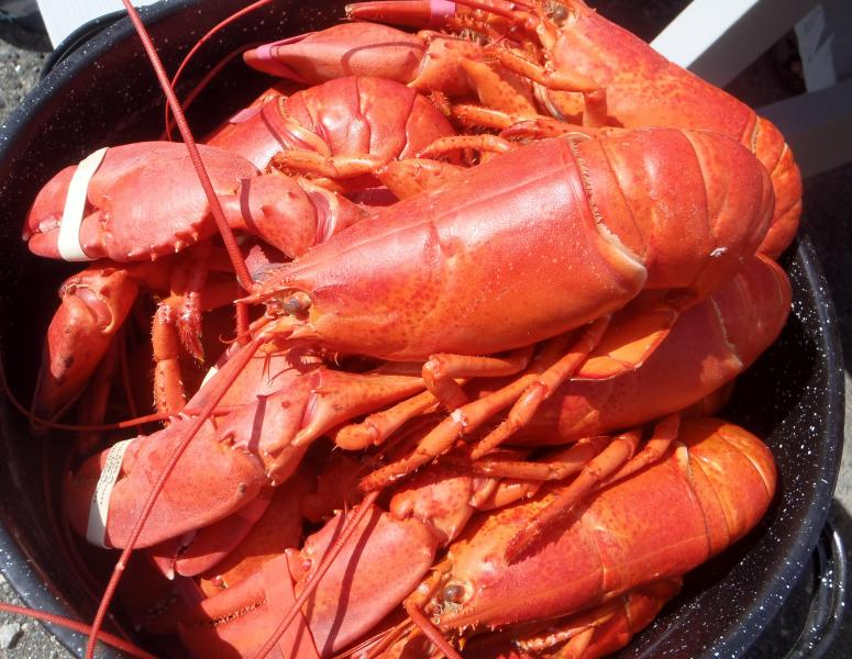 Delicious fresh lobsters available from local fish market!