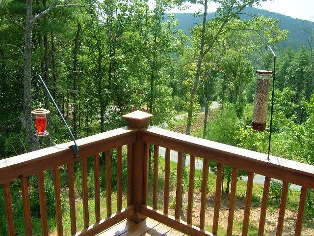 Birds come to feed from front deck