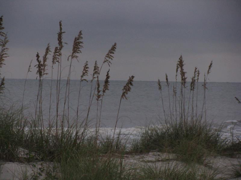 Sea oats and dunes welcome you