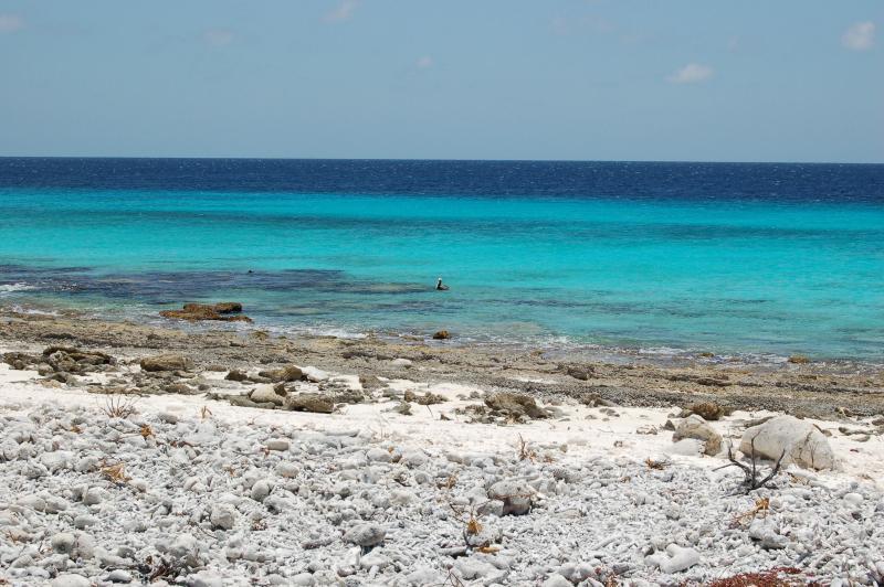 Typical coastline Bonaire