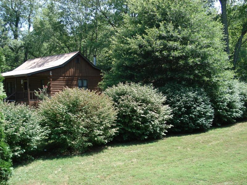 Shrubs provide plenty of privacy from the neighbor to the left