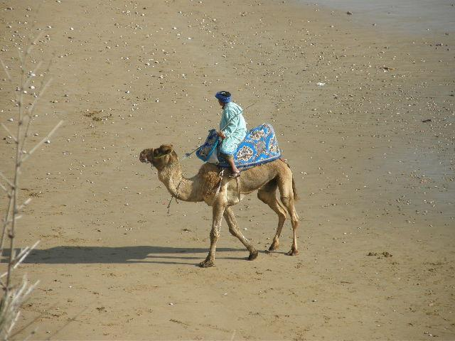Our Taghazout camel driver