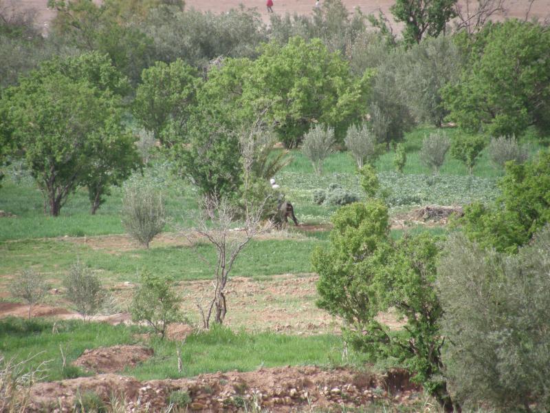 Local Argan trees