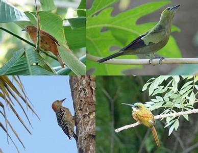 Many beautiful birds visit us