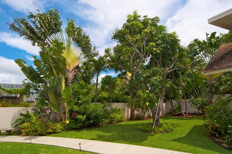 Side Yard with Mango Tree