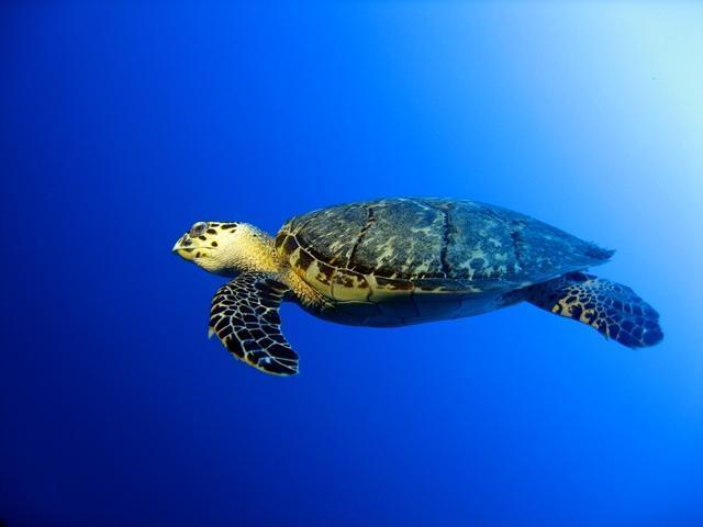 Love the turtles!!