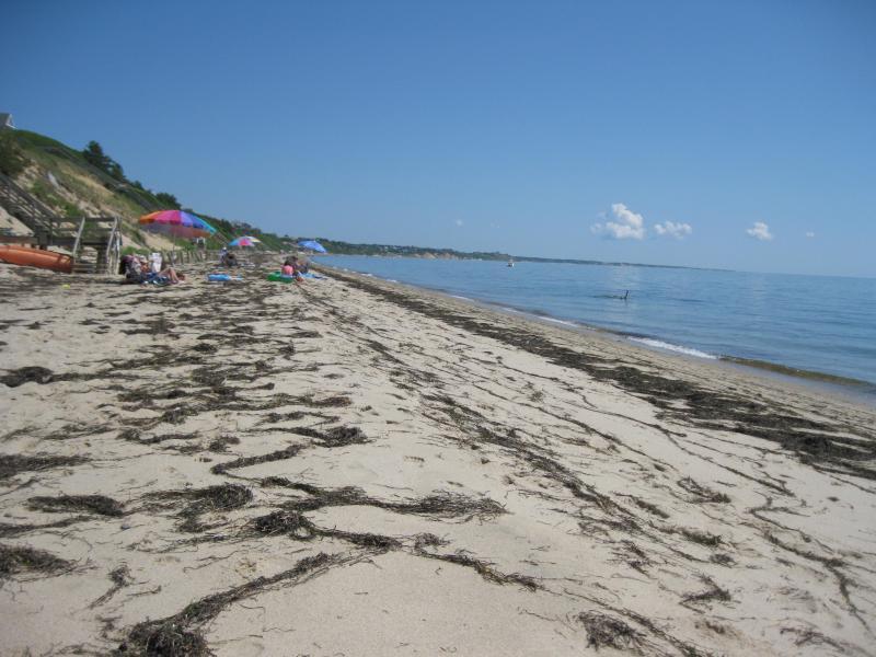 Our Beach - semi private 3 minute walk toward Wellfleet