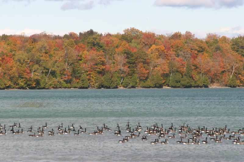 Area Lake during the Fall