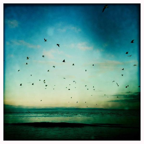 pájaros de una pluma...