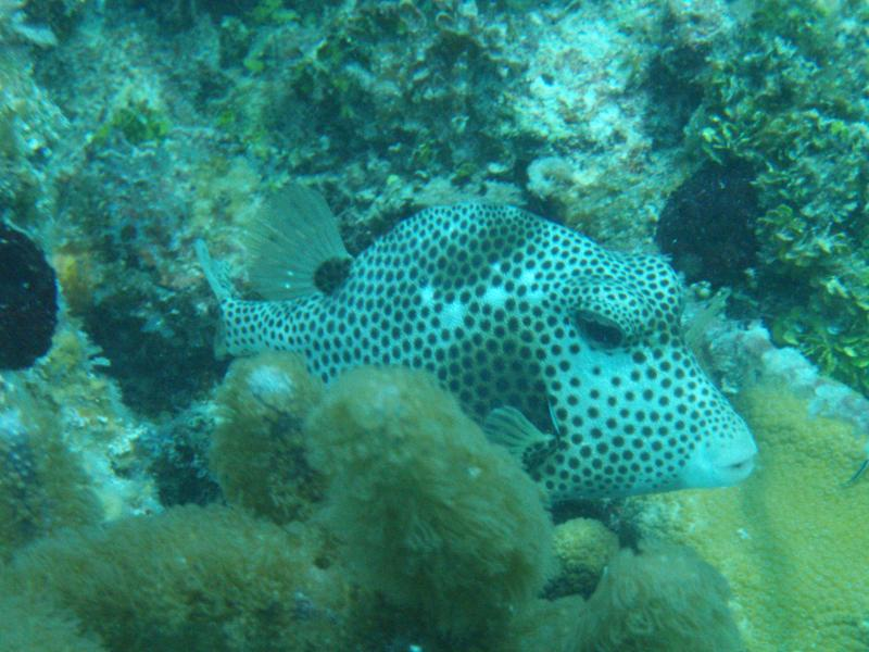 picture taken snorkeling off of our beach