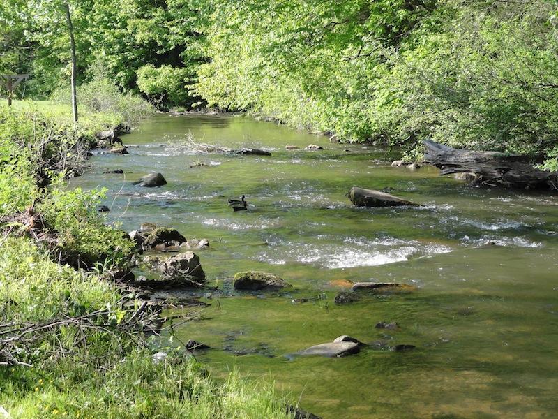 Il Beaver Dam Creek