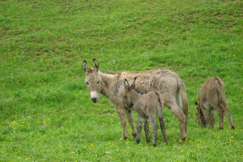 Residentes burros - por favor traer las zanahorias!