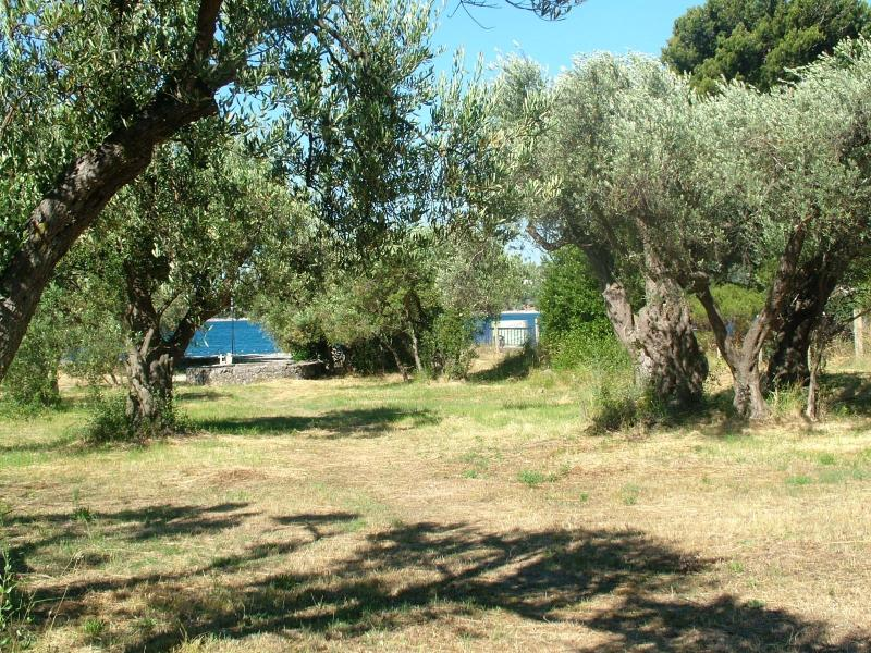 our garden with olive trees