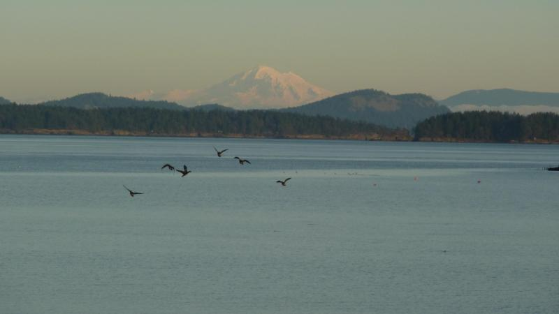 Snow Capped Mount Baker in the distance