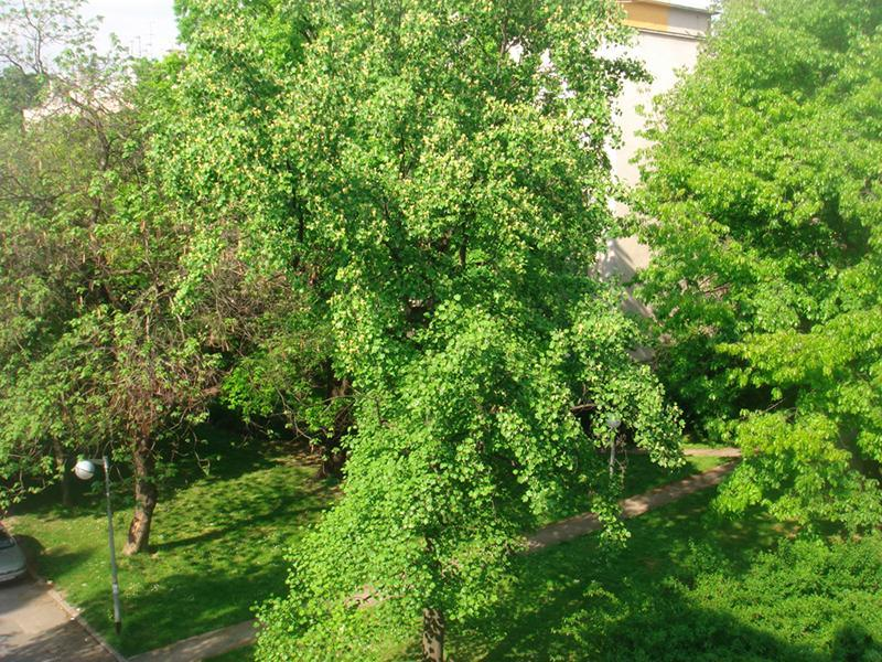 View from the balcony - summer