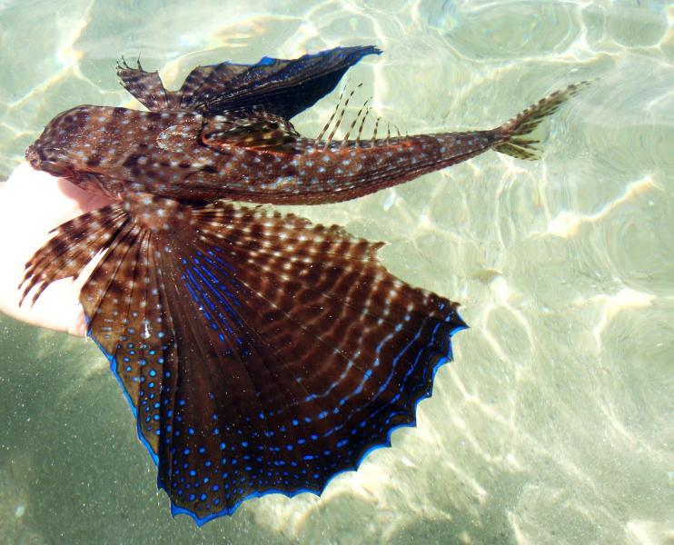 Sea life.
