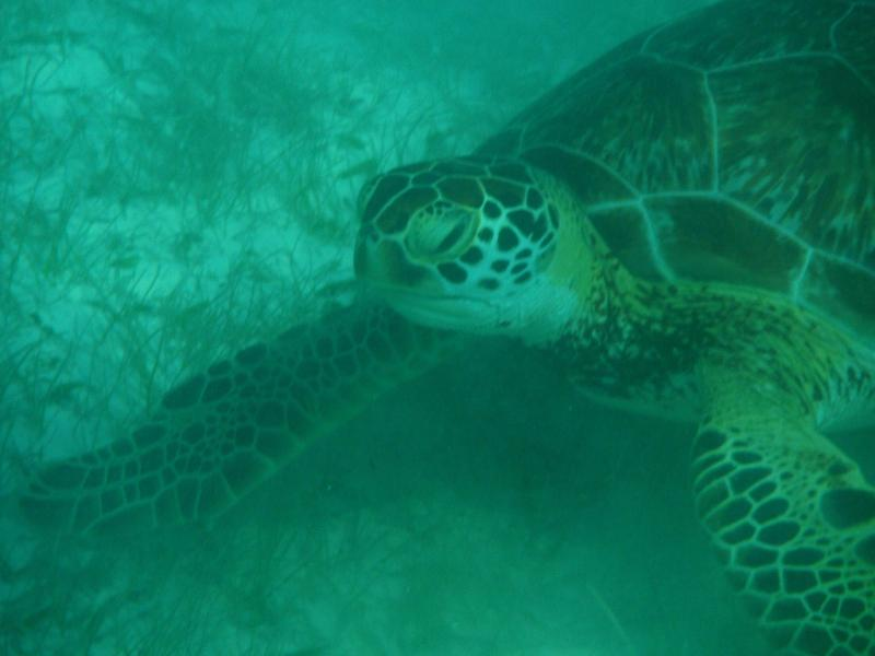 Coming eye to eye with a turtle in Half Moon Bay