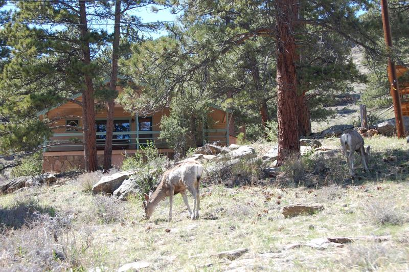 Deer at front of cabin