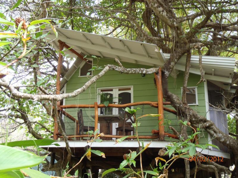 Playa Selva Tree House nestled in a Banyan