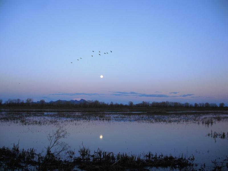 Moonrise over the Colusa National Wildlife Refuge, with the Sutter Buttes in the background