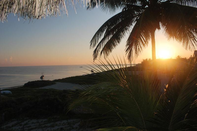 Sunrise with Palm Tree